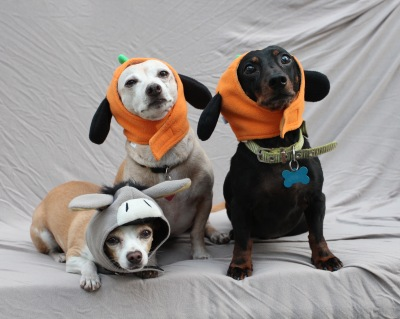 Halloweener Dogs