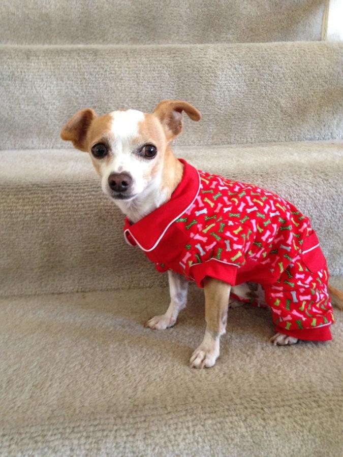 Dogs in Pajamas