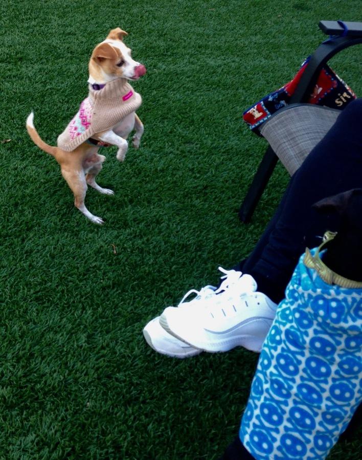 Dog Park Time
