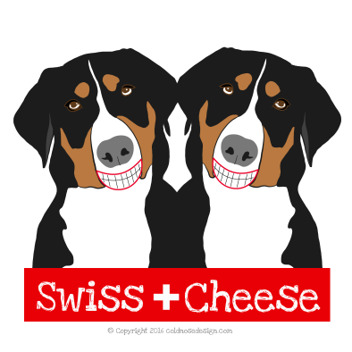 Swiss Mountain dogs smiling at the camera