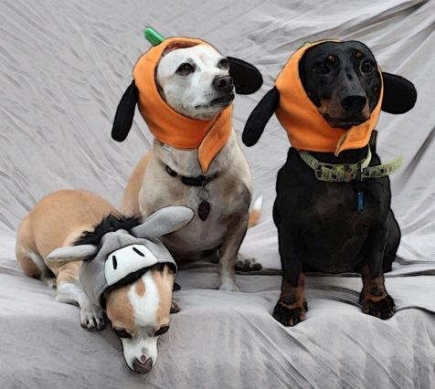 pumpkin_dogs.jpg